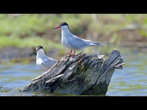 Aménagement de pontons pour accueillir des oiseaux migrateurs