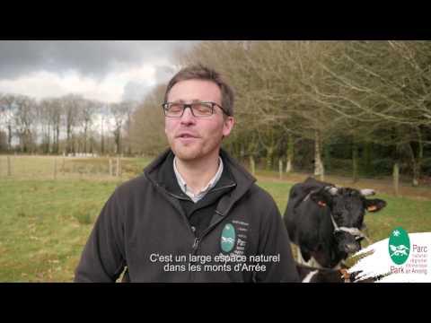 Rencontre avec la vache Bretonne Pie Noir en Armorique !