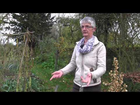 """Christiane Laude jardine au naturel pour protéger la planète et faire """"sa petit part de colibri"""""""
