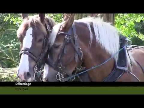Le cheval de trait breton au service des espaces naturels du Parc d'Armorique