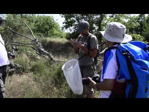 Tous en action ! Parc du Verdon : les inventaires citoyens de la biodiversité